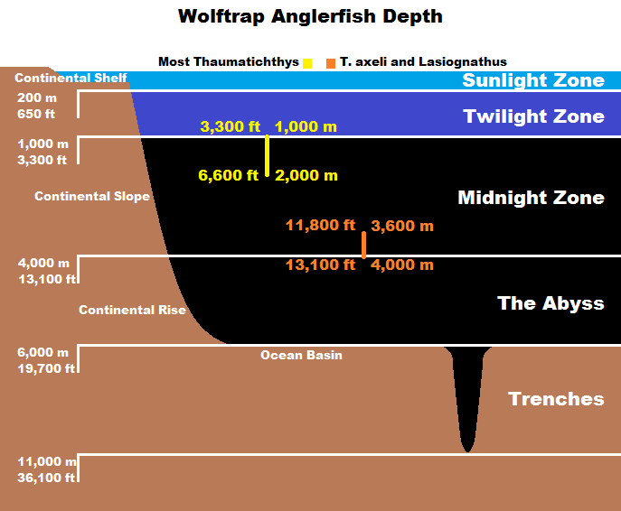 Real monstrosities wolftrap anglerfish for Where do angler fish live