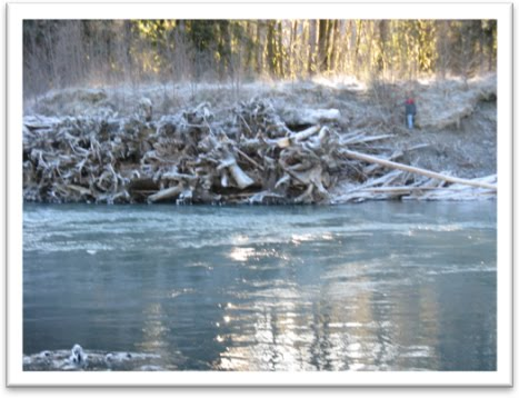 The fish files hoh river project for Hoh river fishing report