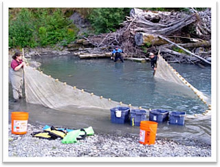 Seining at Hoh River Site 1