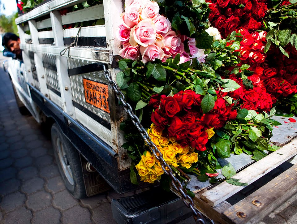 ecudorian rose industry Case summary the ecuadorian rose industry causes ecuador's climate is perfect for growing flowers volcanic soil snowmelt 12 hours of sunshine gives ecuador a competitive advantage.