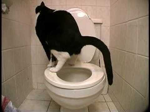 http://2.bp.blogspot.com/_BrlMnysA-B8/S8CWT6SobUI/AAAAAAAAAD0/zzkTmXw_UAI/s1600/kucing+berak.jpg