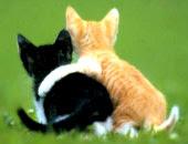 un amic és aquell que confia en les possibilitats que un no té.