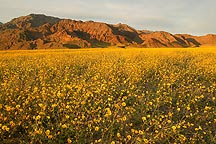 If Death Valley In California Looks Like This Ever Wondered How Alive Valley Would Look LIke?