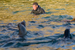 Patagonia Adventure Sea Lions Dive in Peninsula Valdes Patagonia Argentina