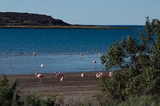 Flamingos in Peninsula Valdes Patagonia