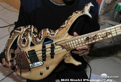pictures of cool looking bass guitars big bass tabs forum