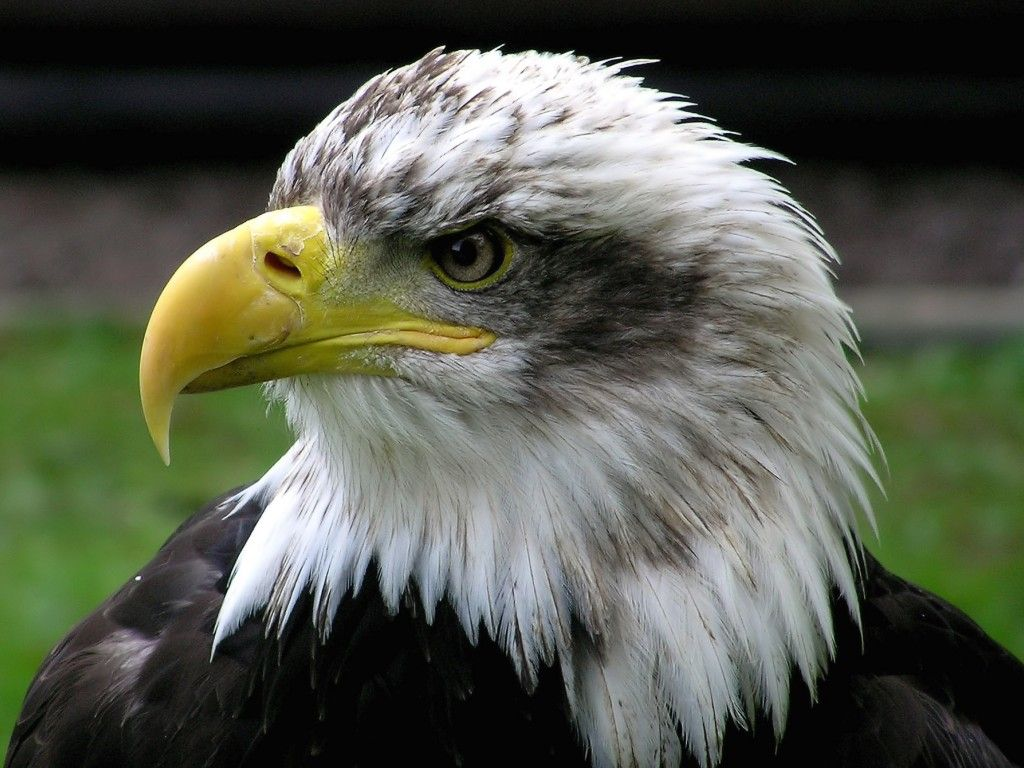 http://2.bp.blogspot.com/_BvTQDfwLKYY/TF6T1m_DIuI/AAAAAAAABPA/VPlKL-Sq2uk/s1600/Eagle+(30).jpg