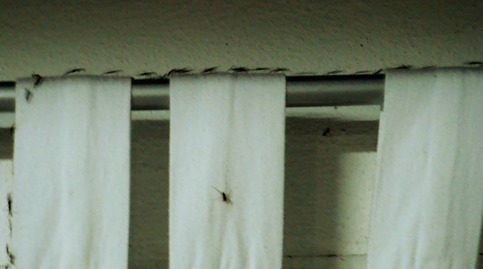 Tiny Black Ants Kitchen Small Ants In Kitchen Tiny Black Bugs With Wings That Gather