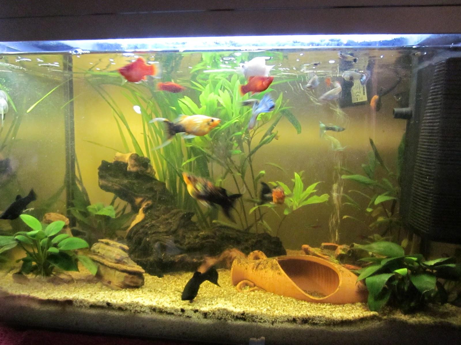 Il david aquarium blog il mio grande acquario di 60 litri for Acquario grande usato