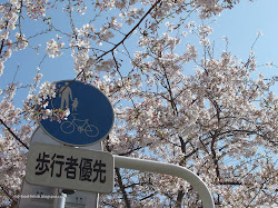 Featured Post - Sakura in Japan