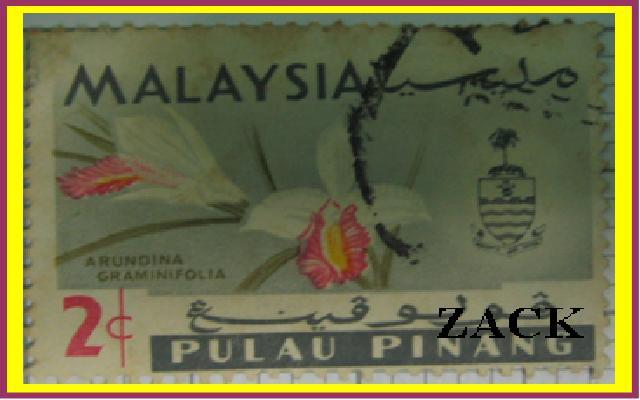 Wild Orchid de Sabah, Borneo, Malasia Galería de Fotos de Wong Tsu Shi en pbase.com