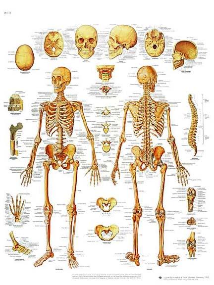 el cuerpo humano y sus partes: junio 2010