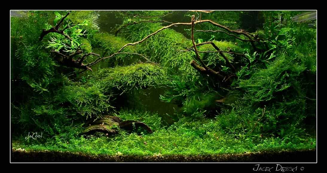Design Aquascape Indonesia Design Aquascape