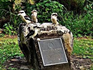 Kookaburra Heaven