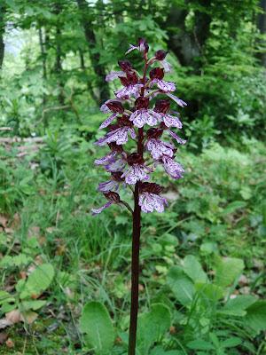 fleur de forêt