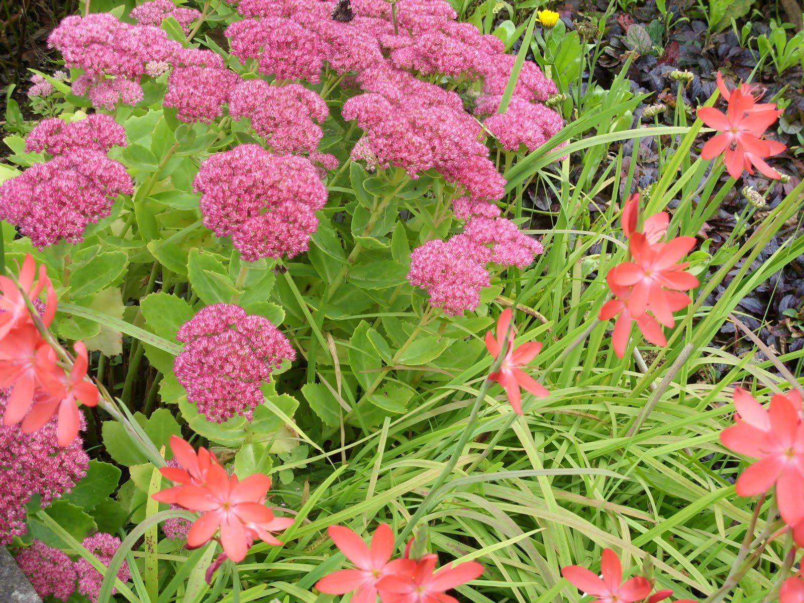 Kellis Northern Ireland Garden Autumn Colour Perennials N Shrubs