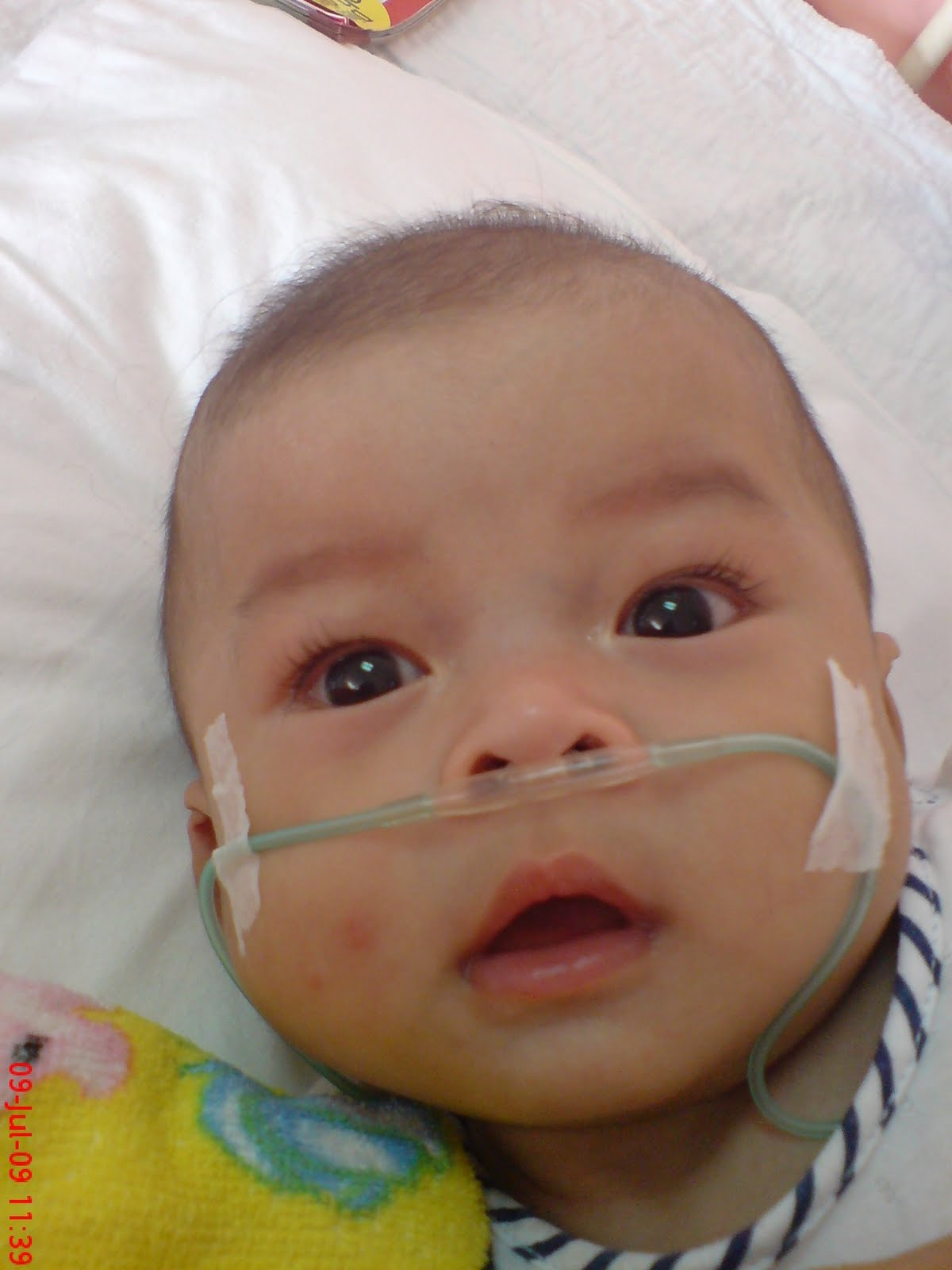 Anas - 6 months (5.6 kg)