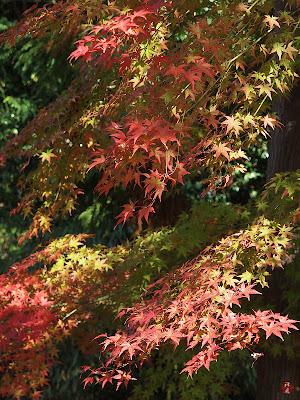 Image Result For Autumn Leaf Coloring