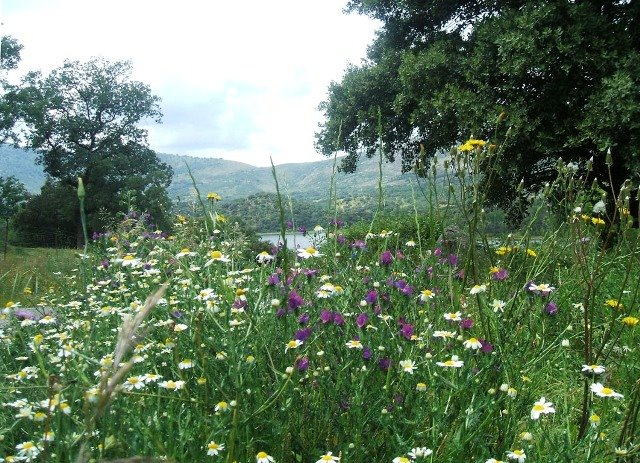 Todo el Valle estaba verde y florido