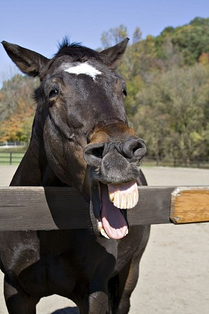 michelle obama horse teeth