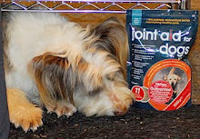 We are proud to be supported by Joint Aid for Dogs