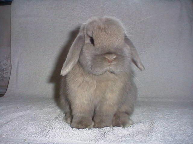 Cuidados de los conejos