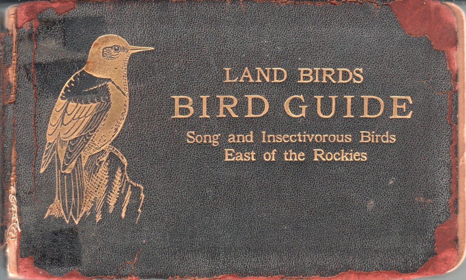 http://2.bp.blogspot.com/_C7blMxjWiKg/THWaANPapUI/AAAAAAAACgQ/JcCmdBlWUMo/s1600/bird%2Bguide.jpg