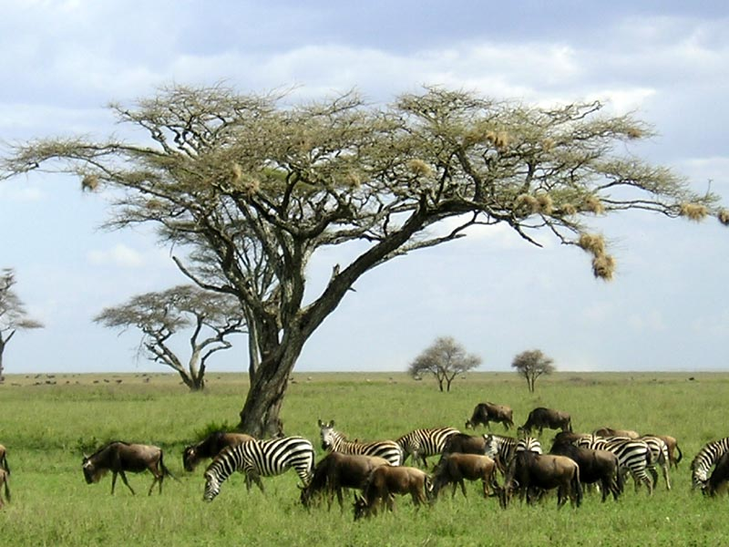Serengeti Tanzania  City pictures : Serengeti Park | Traveling To Heaven