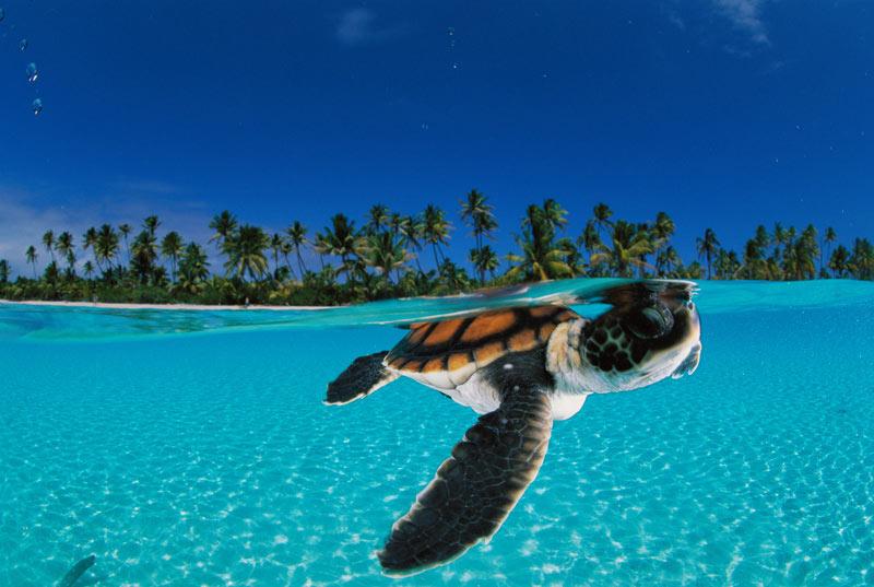 fotos de animales marinos - Los diez animales prehistóricos extintos más aterradores
