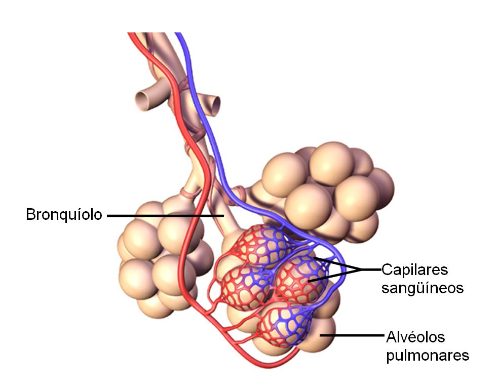 Sistema Respiratorio: marzo 2013