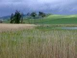 RSPB Loch of Kinnordy