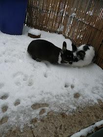 Laura und Karlchen im Schnee