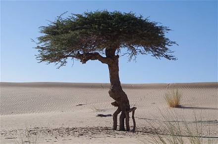 Des mots des images des arbres qui marchent for Services aux entreprises qui marchent