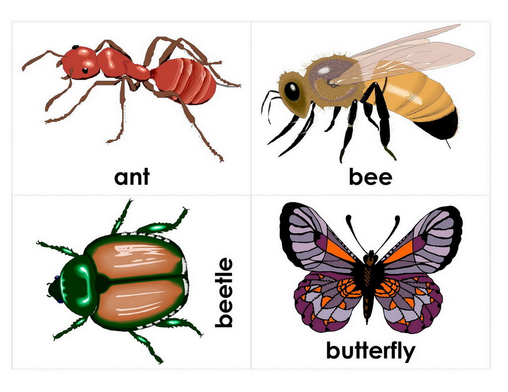 english for kid interesting insects common insects visuals