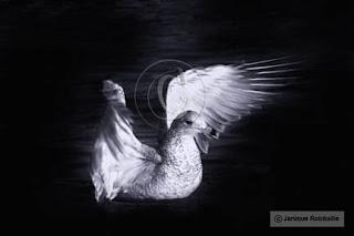 photo artistique goeland mouette