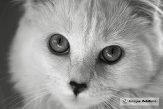 photo noir et blanc animal chat