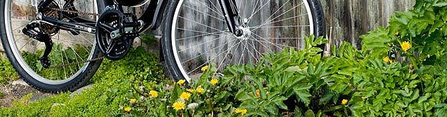 Reykjavik Bike Tour
