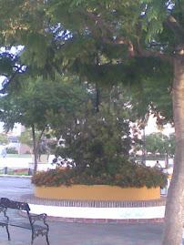 Árbol en la feria