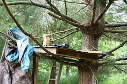 project day...a tree fort!