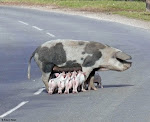 """Road Hog"""