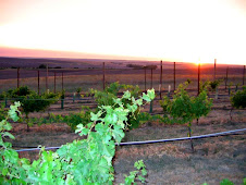 Sunset on Cab Franc