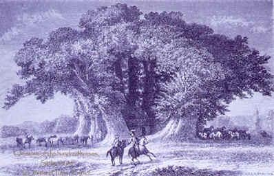 Caractère du Loup-Aulne dans LOUP WEB-Chataignier-Cent-Chevau