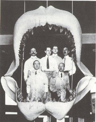 Algunos de los animales más grandes que han existido jamás Megalodon+3