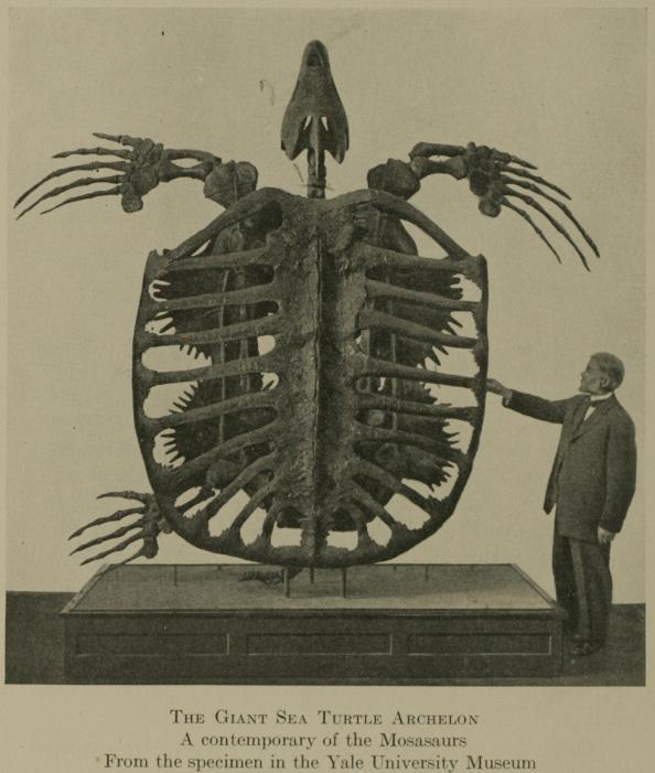 Algunos de los animales más grandes que han existido jamás Archelon_skeleton
