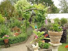 foto van mijn tuin
