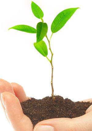 Soundboradio plantar un rbol para contribuir con el for Arboles para plantar en invierno