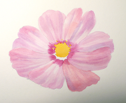 Paint draw paint learn to draw water color basics a cosmos flower mightylinksfo