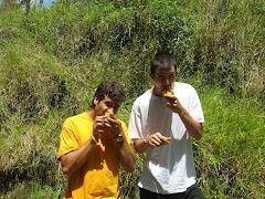 Menjant mangos!!