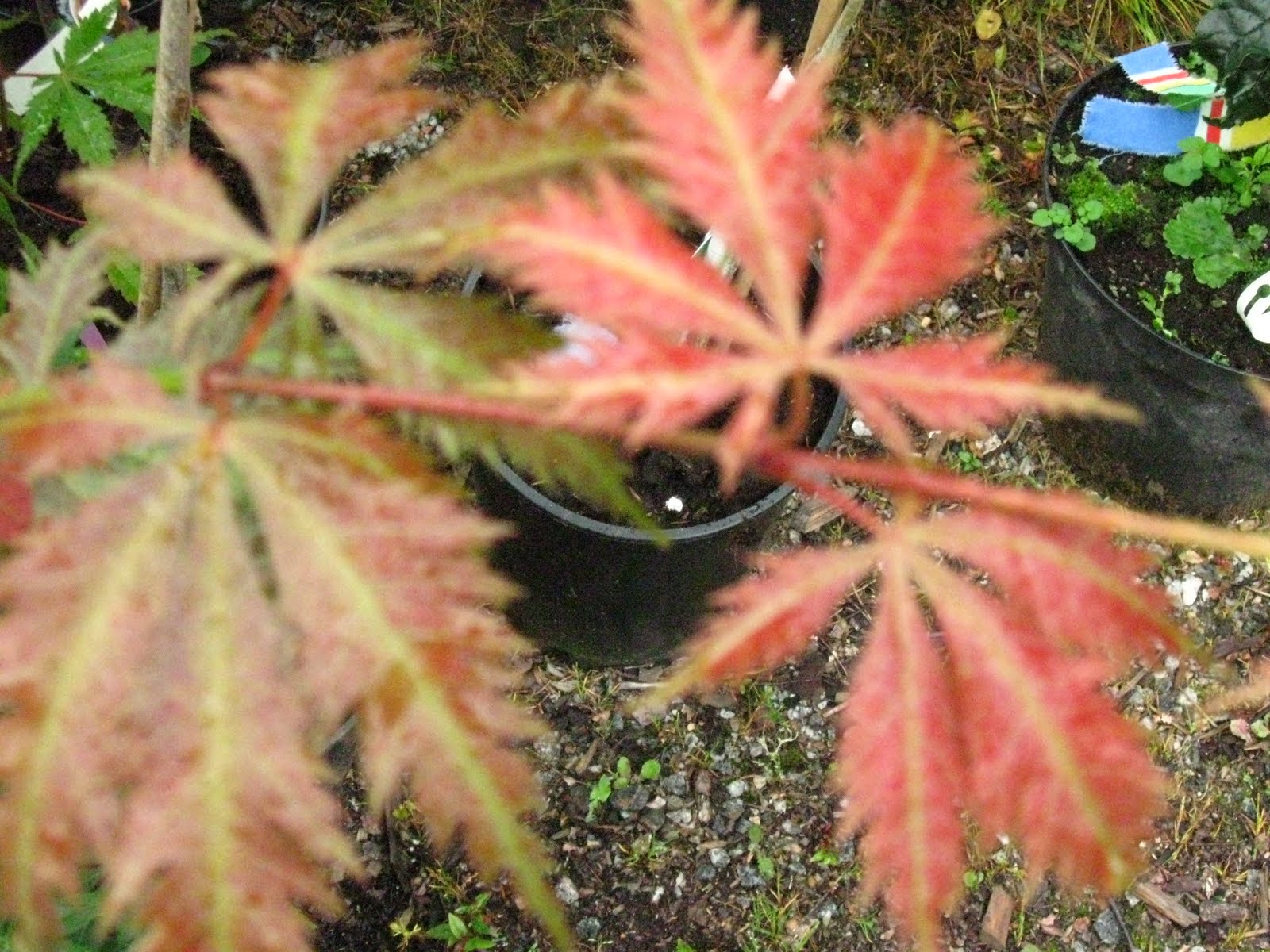 Blomsterbo: nya växter...