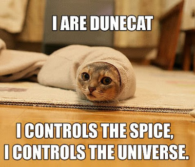 dunecat